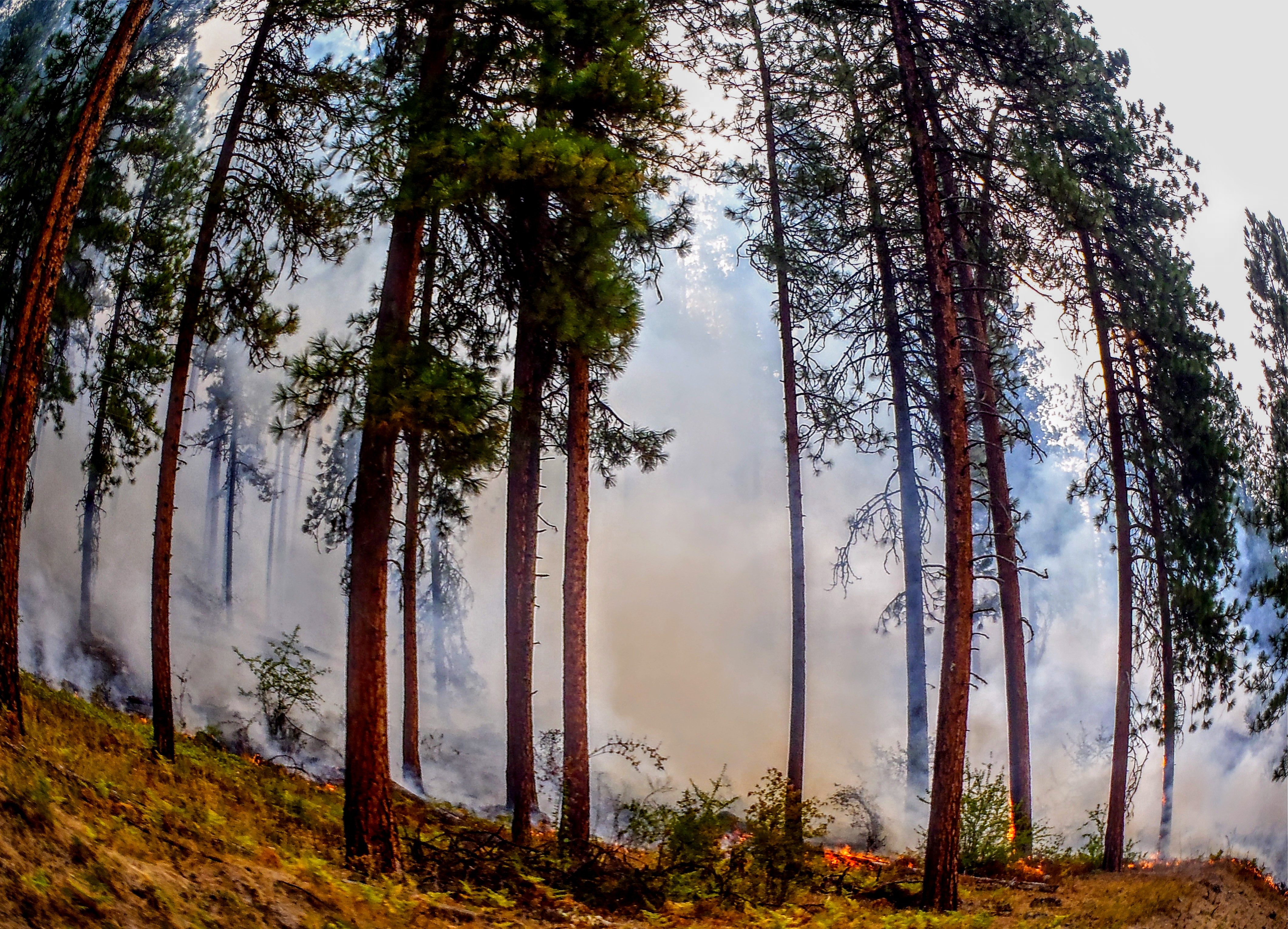 Healthy fires lead to healthy watersheds